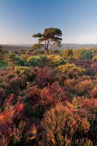 Photograph Short listed in Take a View Landscape Photographer of the Year 2012